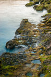 Moss grow on sea rock. The moss grows in rock of sea at sunset on the coast of the Atlantic Ocean in  Setubal, Portugal Stock Image