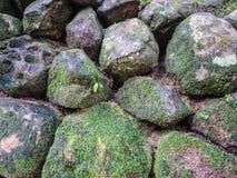 Moss grow up on the rock Stock Photos