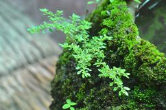 The moss grow up on the jar Royalty Free Stock Photography
