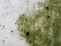 Moss Grow on The White Wall Royalty Free Stock Photos