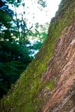 Moss Growing On Angled Tree-Stamm Lizenzfreie Stockfotos