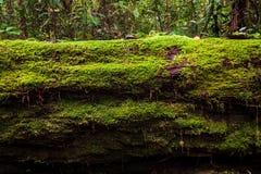 Moss growing in big fallen tree Royalty Free Stock Photos