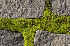 Moss growing on cobble stones Royalty Free Stock Images