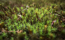 Moss growing in the complex of Sanzen-in Temple. Royalty Free Stock Images