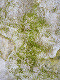 Moss growing on the concrete Royalty Free Stock Photo