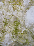 Moss growing on the concrete Royalty Free Stock Photos