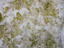 Moss growing on the concrete Royalty Free Stock Image