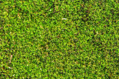 Moss growing on the concrete floor. Royalty Free Stock Photos