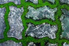 Moss growing on the concrete floor. Royalty Free Stock Photography