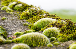 Moss growing on concrete Stock Image
