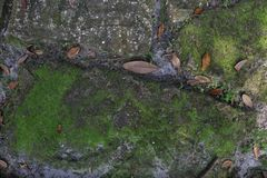 Moss Growing on Concrete Pathway royalty free stock photos