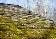 Moss growing on house shingles Stock Photo