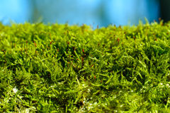 Moss growing on a log. In a forest Stock Photos