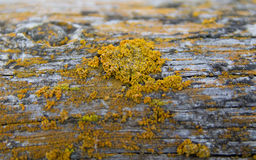 Moss growing on log Stock Photography