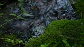 Moss growing near a creek drinking water.  stock footage
