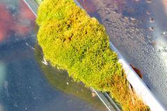 Moss growing next to glass. Royalty Free Stock Photography