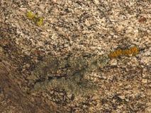 Moss Growing In Rock Arkivbild