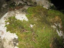 moss-growing-on-rock Stock Photos