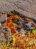 Moss growing on a rock Royalty Free Stock Images