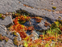 Moss growing on a rock Royalty Free Stock Photos