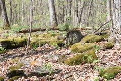 Moss growing on Rocks Royalty Free Stock Photo