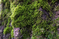 Moss growing on a tree Stock Photo