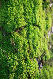 Moss growing on tree in forest Stock Images