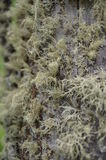 Moss growing on a tree. Shot in the area of ​​the river Baschelak Royalty Free Stock Image