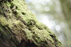Moss Growing on a Tree Trunk Royalty Free Stock Images