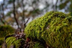 Moss growing on tree trunk Stock Photos