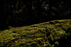 Moss growing on trunk royalty free stock photography