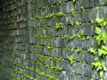 Moss growing on a tunnel wall Royalty Free Stock Photography