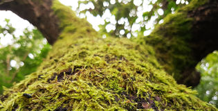 Moss Growing Upwards On Tree immagini stock libere da diritti