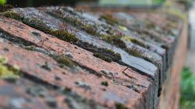 Moss Growing On Wall Brickwork Lizenzfreies Stockbild