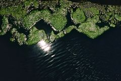 Moss growing on water. Water in the sunshine, with plants growing on the surface Stock Photography