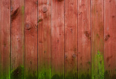 Moss growing on wood panelling. Background Royalty Free Stock Photo