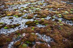 Moss-grown concrete surface Royalty Free Stock Photography