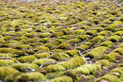 Moss - grown roof Abstract Background Royalty Free Stock Image