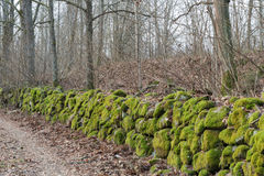 Moss-grown stone wall Stock Image