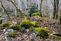 Moss-grown stones in the wood Stock Image