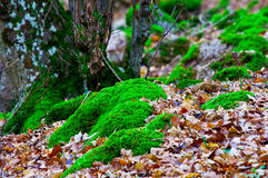 Moss-grown tree Stock Photos