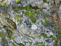 Moss grows on a big stone royalty free stock images