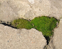 Moss grows in the cracks on the concrete path Stock Photo