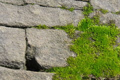 Moss grows in the cracks of rocks Royalty Free Stock Image