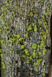 Moss grows on the north side of a tree Stock Photography