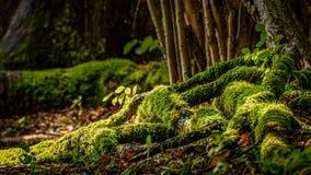 Moss Grows op boom tert toe royalty-vrije stock afbeeldingen