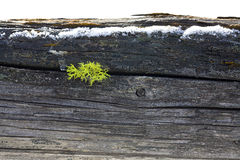 Moss grows in wood post. Stock Photo