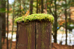 Moss grows on wooden pole Stock Photos