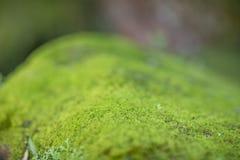 Moss Growth verde Superficie de la textura del musgo, fondo verde del musgo imágenes de archivo libres de regalías