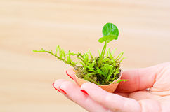 Moss in hand Royalty Free Stock Images